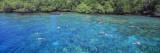 People Snorkeling  Kealakekua Bay  Hawaii  USA