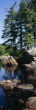 View of Rocks in a River  Moose River  Adirondack Mountains  New York State  USA