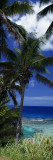 Palm Trees on Island Coast  Blue Ocean Water  Nive Island  South Pacific