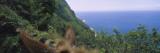 Mule on the Beach  Pacific Ocean  Kalaupapa  Molokai  Hawaii  USA