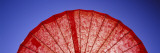 Close-Up of a Red Parasol  USA