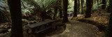 Picnic Tables in a Forest  Temperate Rainforest  Tarra-Bulga National Park  Victoria  Australia