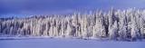 Winter Wawona Meadow Yosemite National Park  CA