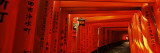 Torii Gates of a Shrine  Fushimi Inari-Taisha  Fushimi Ward  Kyoto  Honshu  Japan