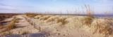 Sand Dunes on the Beach  Anastasia State Recreation Area  St Augustine  Florida  USA