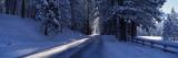 Road Passing Through a Landscape  Wawona  Yosemite National Park  California  USA