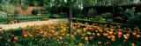 Tulips in a Garden  Springfields Garden  Lincolnshire  England