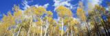 Colorado  Uncompahgre Nationa Forest