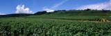 Vineyard  Burgundy  France