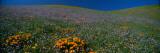 Wildflowers on a Hillside  California  USA
