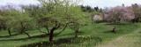 Trees in a Garden  Ellwanger Garden  Rochester  Monroe County  New York State  USA
