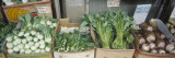 Organic Asian Vegetables in Containers at a Market Stall  Honolulu  Hawaii