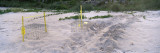 Loggerhead Turtle Tracks on the Beach  Osprey  Sarasota County  Florida  USA