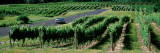 Car on a Road Passing Through Vineyards  Chateau Chantal  Grand Traverse County  Michigan  USA