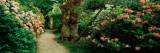 Isabella Plantation in a Park  Richmond Park  London  England