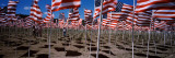 American Flags Laid Out in a Field  Questa  Taos County  New Mexico  USA