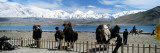 Camel Handlers Waiting for Tourists  Muztagh Ata  Karakul Lake  Xinjiang Province  China