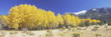 Colorado  Beckwith Mountain  Autumn