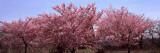 Trees in a Garden  Niagara Parks Botanical Gardens  Niagara Falls  Ontario  Canada