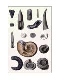 Shells: Cephalopoda