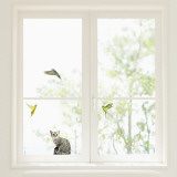 Budgerigars and cat  (Window Decal)