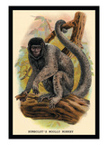 Humboldt's Woolly Monkey