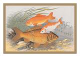 Golden and Bronze Carp