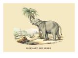 Elephant d'Inde