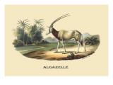 Algazelle