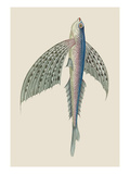 Winged Fish