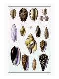 Shells: Convoltae and Orthocerata
