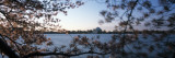 Cherry Blossom with Memorial in Jefferson Background  Tidal Basin  Potomac River  Washington DC