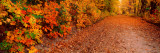 Road Passing Through Autumn Forest  Traverse City  Grand Traverse County  Michigan  USA