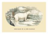 Ours Blanc de la Mer Glaciale