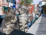 Venetian Cats Alongside Fond Die Terranova Canal