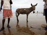 Two Workers Taking Break from Collecting Salt with a Donkey Between Them  Lake Asele