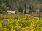 Vineyards Near Greve in Chianti  Seen from Hamlet of Borgo Le Mura