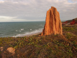 Termite Mound on Coast of Cape York  North of Cooktown