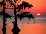 Sunrise at Lake Palourde with Spanish Moss Trees in Silhouette