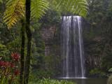 Milla Millaa Falls