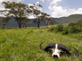 Cape Buffalo Skull and Hills of Ngorongoro Crater
