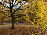 Autumn in Greenwich Park