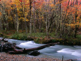 Nothofagus Forest and Stream on Hielo Azul Circuit Walk  Comarca Andina  Lake District
