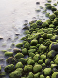 Algae-Covered Boulders on Beach