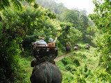 Tourists Riding Elephants Along a Chiang Mai Elephant Camp Trail