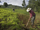 Farmers Clearing Shrub from Corn Fields Near Sabalpop Village
