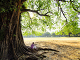 Man Sitting under a Banyan Tree
