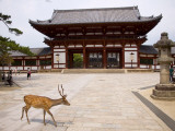 Deer Strolling Past Entrance Gate to Todai-Ji (Temple)