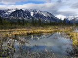 Beaver Pond Beneath Peaks of the St Elias Range