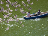 Rowing Along Cherry Blossom-Lined Chidorigafuchi